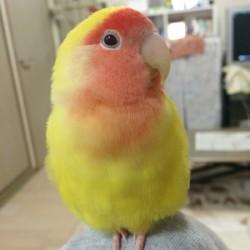 鳥フォトコンテスト「らぶ」さん
