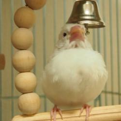 鳥フォトコンテスト「ぽこ」さん