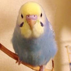 鳥フォトコンテスト「まりん」さん