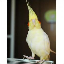 鳥フォトコンテスト「キィ」さん