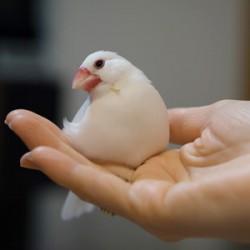鳥フォトコンテスト「ぶん」さん
