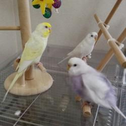 鳥フォトコンテスト「ラピ」さん