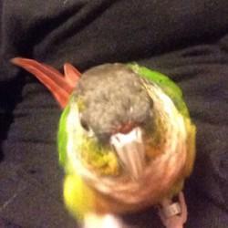 鳥フォトコンテスト「ちょび」さん