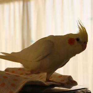 鳥フォトコンテスト「碧」さん