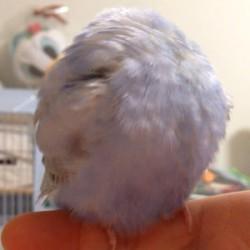 鳥フォトコンテスト「ニコ」さん