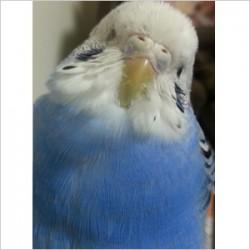 鳥フォトコンテスト「シエル」さん