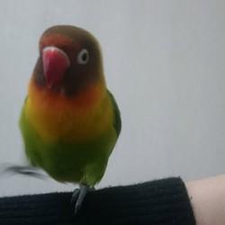 鳥フォトコンテスト「そう」さん