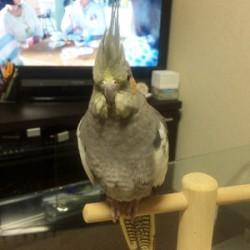 鳥フォトコンテスト「ペコ」さん