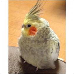 鳥フォトコンテスト「じゅら」さん