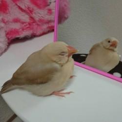 鳥フォトコンテスト「ふう」さん