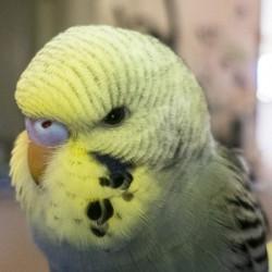 鳥フォトコンテスト「チャッピー」さん