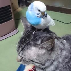 鳥フォトコンテスト「京子」さん