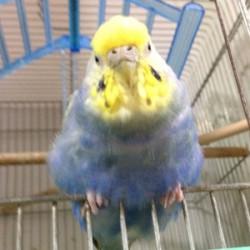 鳥フォトコンテスト「はる」さん