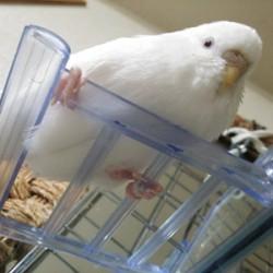 鳥フォトコンテスト「ルナ」さん
