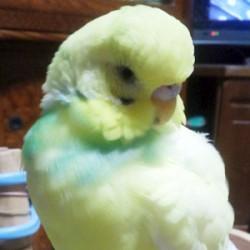 鳥フォトコンテスト「杉コ」さん