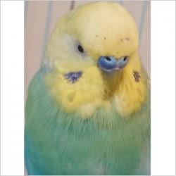 鳥フォトコンテスト「ボン」さん