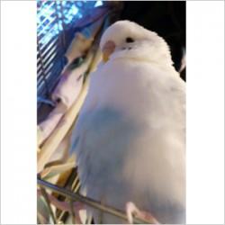 鳥フォトコンテスト「ぴーすけ」さん