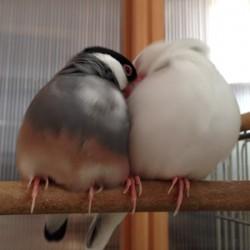 鳥フォトコンテスト「グレ・もや」さん