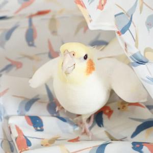 オカメインコ れもん 鳥フォトコンテストvol.017 テーマ「歩く」結果発表