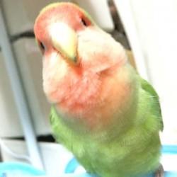 鳥フォトコンテスト「むーす」さん