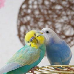 鳥フォトコンテスト「ぴっぴ・ぴーこ」さん