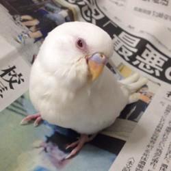 鳥フォトコンテスト「コハク」さん