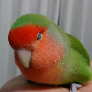 鳥フォトコンテスト「もち」さん