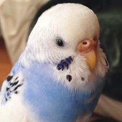 鳥フォトコンテスト「プルー」さん