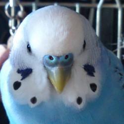 鳥フォトコンテスト「オトマツ」さん