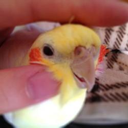 鳥フォトコンテスト「ナンナン」さん