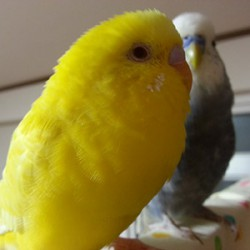 鳥フォトコンテスト「ちっぷ」さん