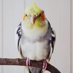 鳥フォトコンテスト「ひー」さん