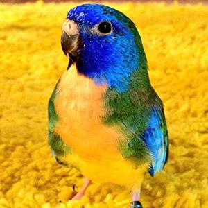 鳥フォトコンテスト「MER」さん