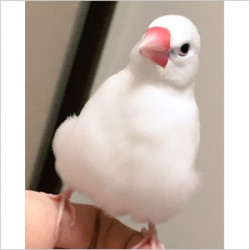 鳥フォトコンテスト「とん」さん