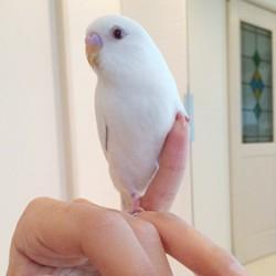鳥フォトコンテスト「タマ」さん