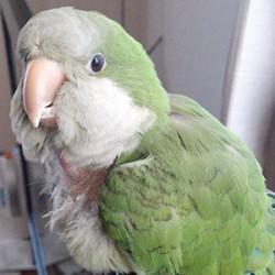 鳥フォトコンテスト「ちーたん」さん