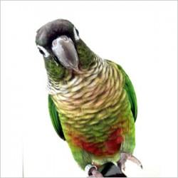鳥フォトコンテスト「CHIRYU」さん