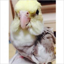 鳥フォトコンテスト「てんちゃん」さん