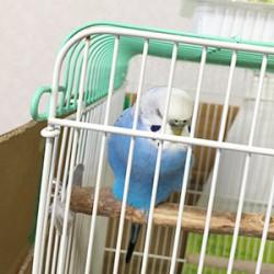 鳥フォトコンテスト「瑠璃」さん