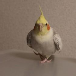 鳥フォトコンテスト「勘吉」さん