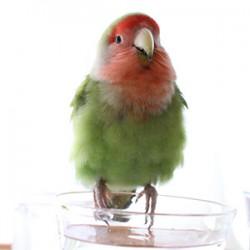 鳥フォトコンテスト「きゅう」さん