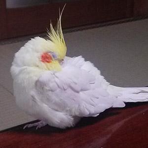 鳥フォトコンテスト「パク」さん