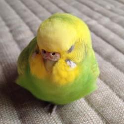 鳥フォトコンテスト「ぴーやん」さん