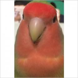 鳥フォトコンテスト「ピヨ」さん