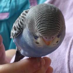 鳥フォトコンテスト「アクア」さん
