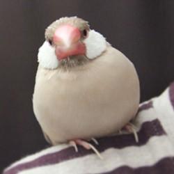 鳥フォトコンテスト「クルミ汁粉」さん