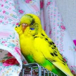 鳥フォトコンテスト「きら」さん