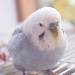 鳥フォトコンテスト「おもち」さん