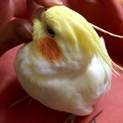 鳥フォトコンテスト「ゆず」さん
