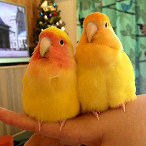 鳥フォトコンテスト「ぴー・おー」さん